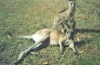 Dotty and first Joey